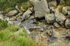 high tatras brook